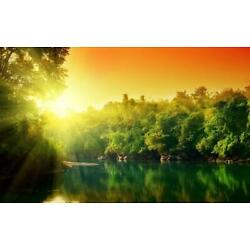 AMAZON RAINFOREST GLOSSY POSTER PICTURE BANNER trees tropical cool nature 2301