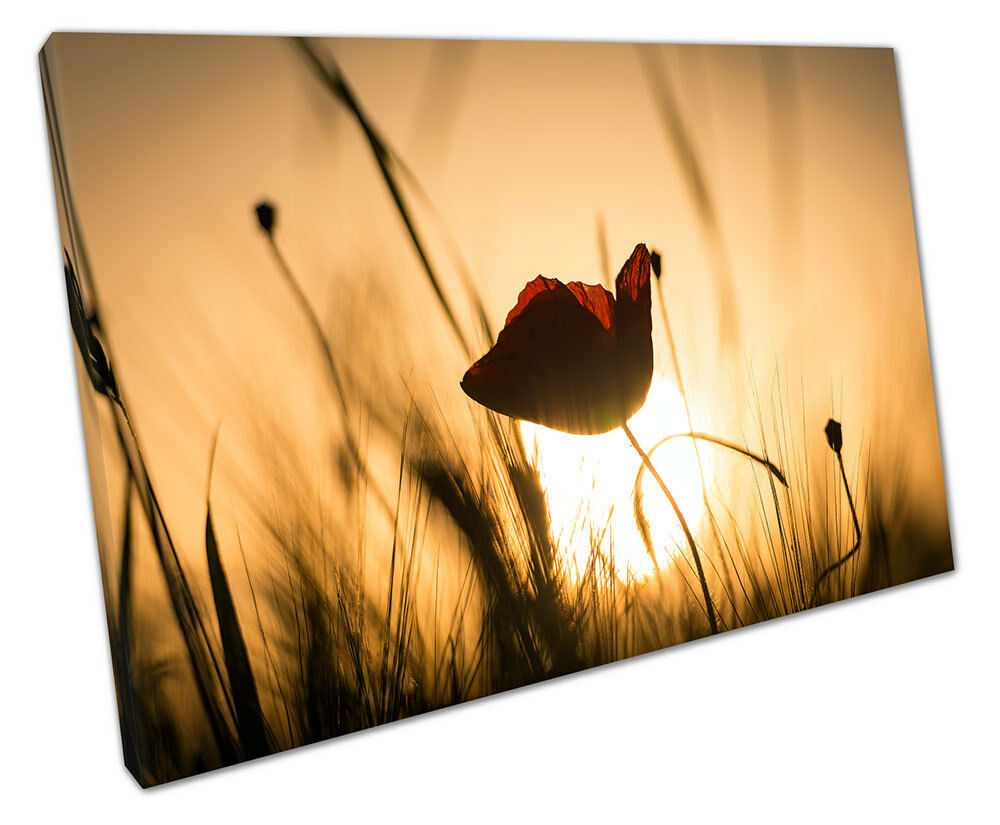 SINGLE RED POPPY CANVAS WALL ART PICTURE LARGE 75 X 50 CM | eBay