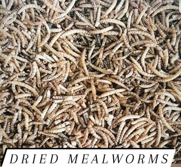 Mealworms Freeze Dried Bulk for Chickens and/or Fish Choose Size!!