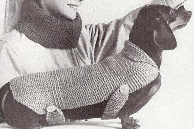 Knitting Patterns For Dachshund Dog Sweaters : Vintage Knitting PATTERN to make Dog Coat Blanket Sweater Dachshund eBay