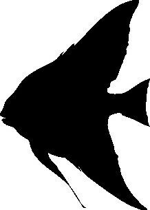 ANGEL FISH SILHOUETTE CAR DECAL STICKER | eBay