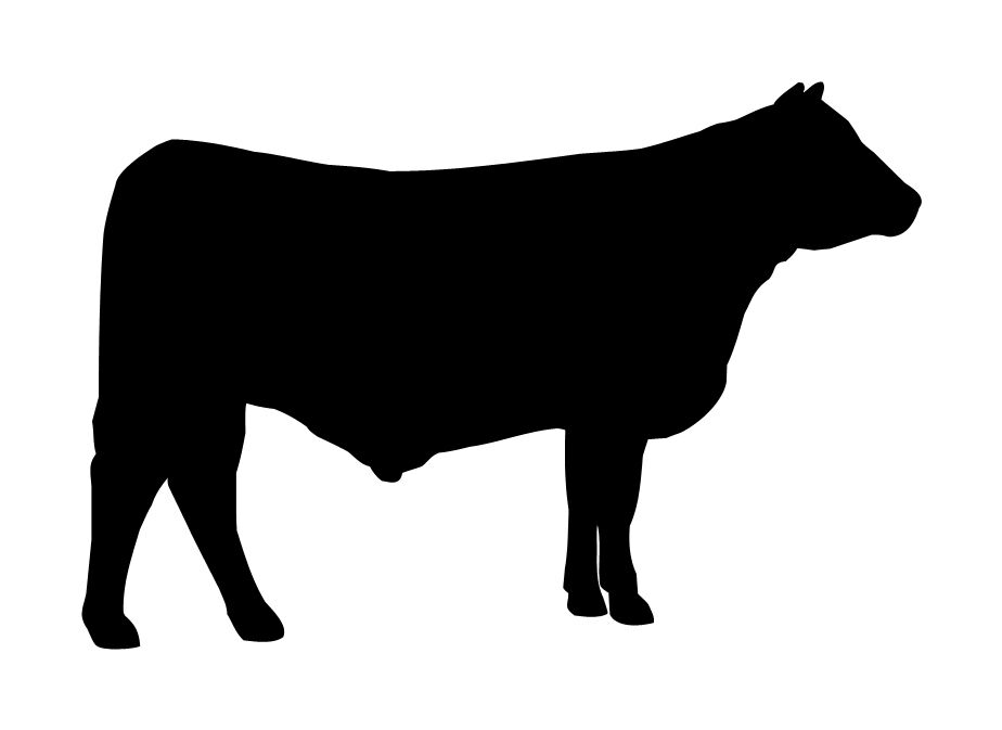 ANGUS COW CATTLE DECAL VINYL STICKER CAR VAN LAPTOP ...