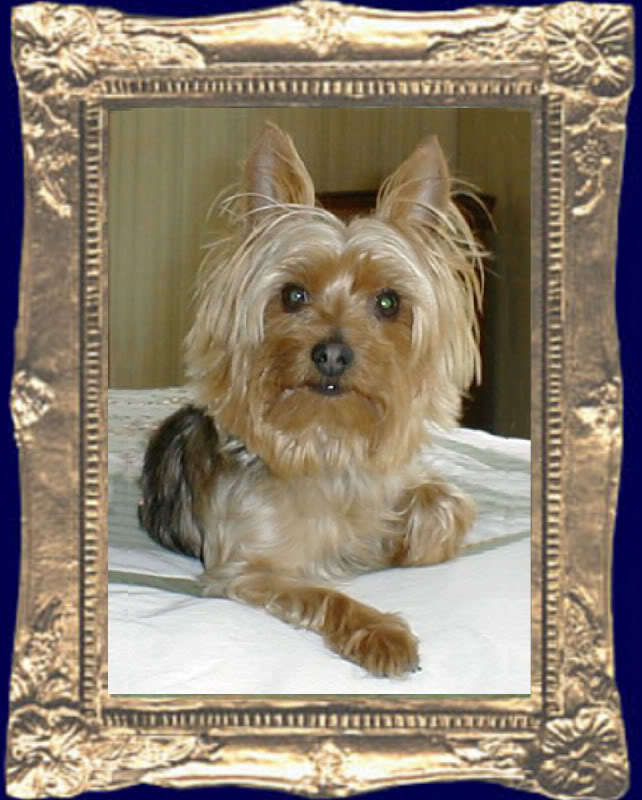 YORKIE DOG Dollhouse Picture FRAMED Miniature Pup Art