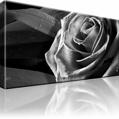 rose schwarz wei blume bild bilder leinwand wandbild kunstdruck ebay. Black Bedroom Furniture Sets. Home Design Ideas