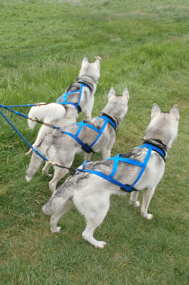 X Back Padded Racing Harness / Scootering/Sleding For ...