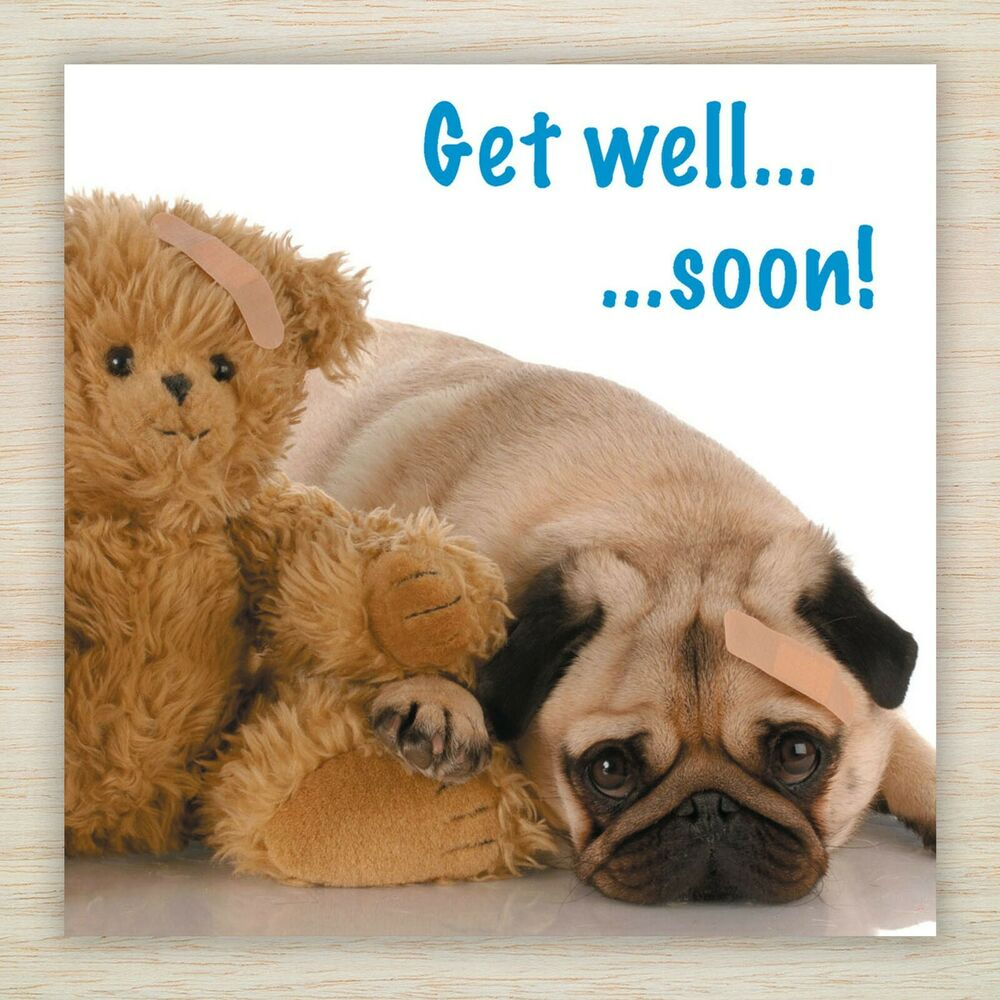 Get well soon blank card cute pug puppy teddy bear for Well pictures