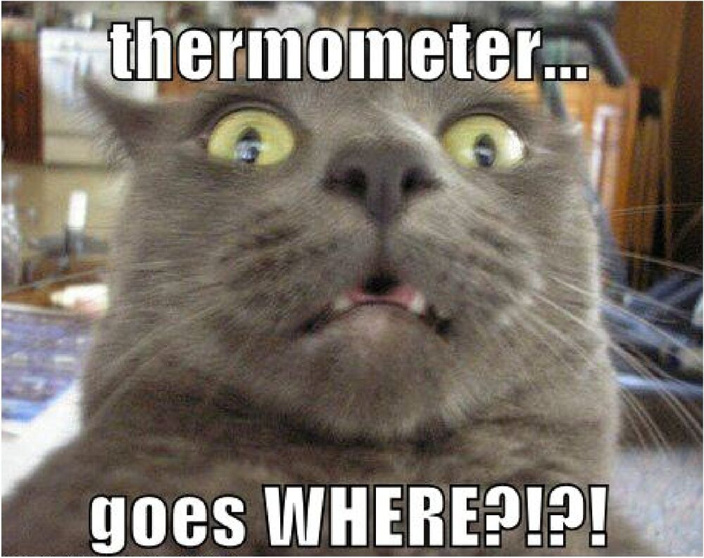 Funny Cat Memes: Funny Cat Thermometer Refrigerator / Tool Box / File
