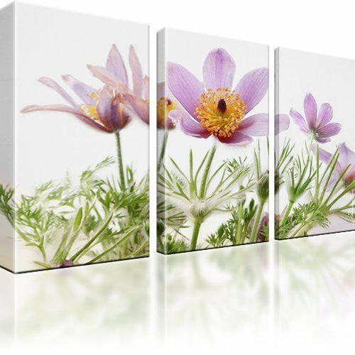 finger kuhschelle blumen bilder auf leinwand fotodruck dreiteilig ebay. Black Bedroom Furniture Sets. Home Design Ideas
