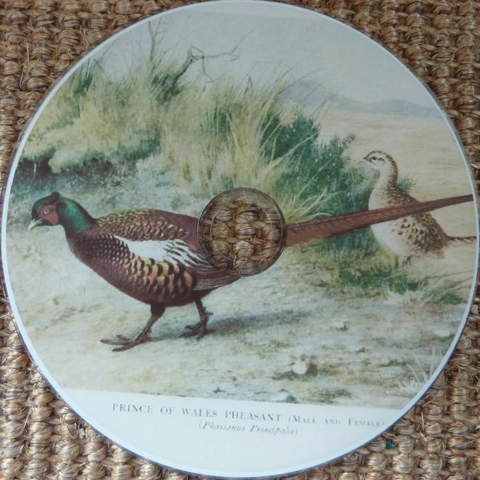 Bird Hunting Games Vintage Pheasant Game Bird