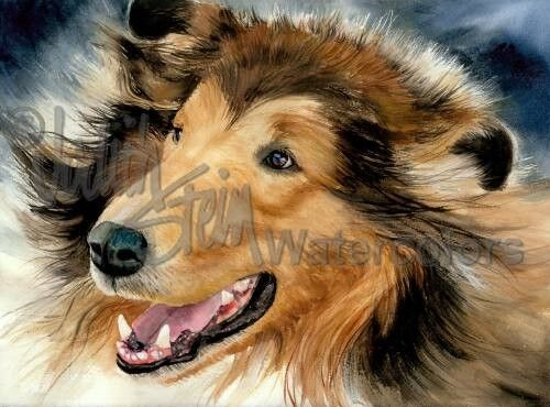 Rough collie lassie dog art print of watercolor painting wall art quot in