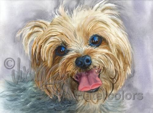 Yorkie Yorkshire Terrier Dog Art Print Of Watercolor
