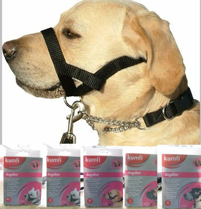 How To Make A Dog Head Halter
