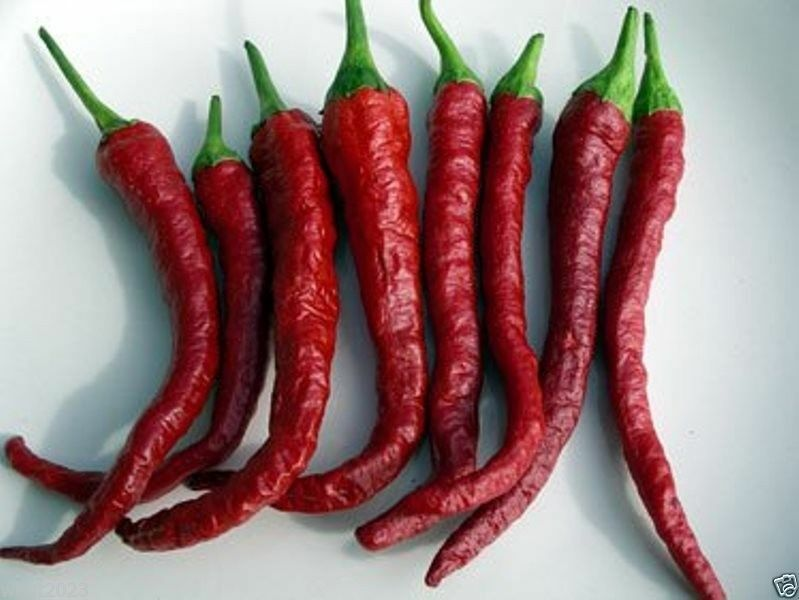50 kashmiri chili pepper seeds famous indian paprika a for Giant chilli thai