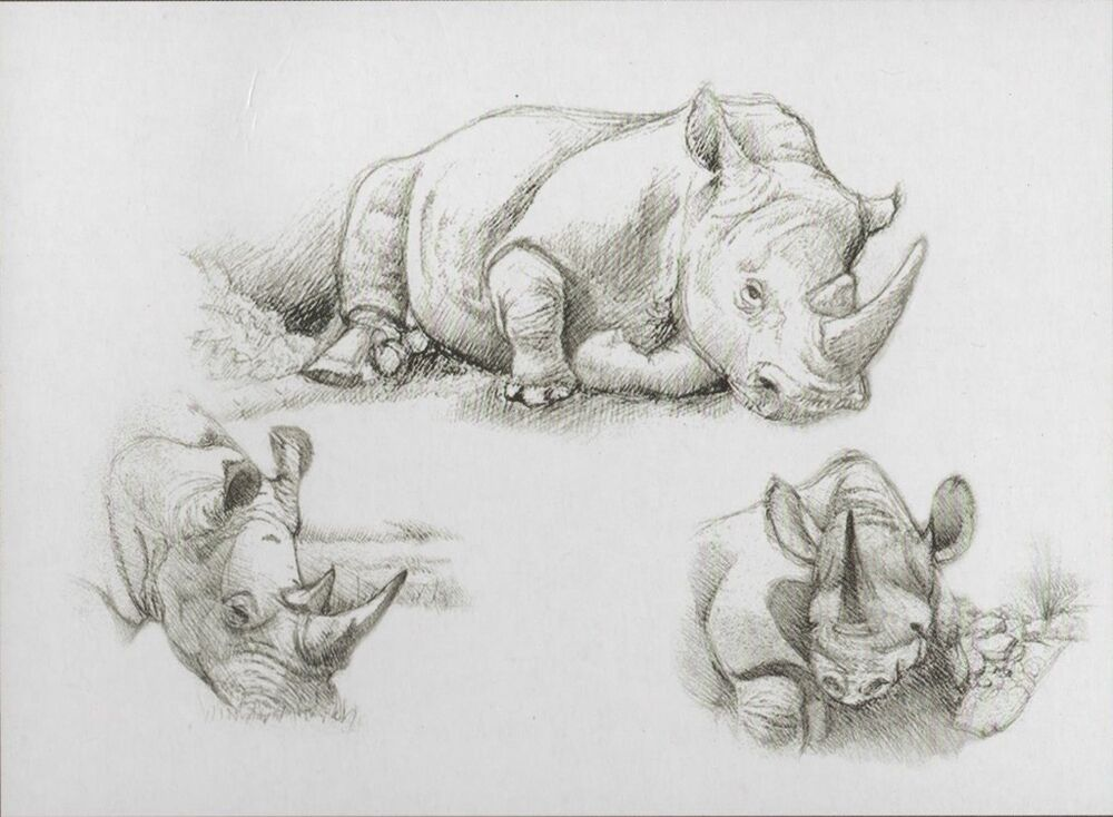 sketching skizzieren malen mit bleistift nashorn afrika 30 cm x 40 cm ebay. Black Bedroom Furniture Sets. Home Design Ideas
