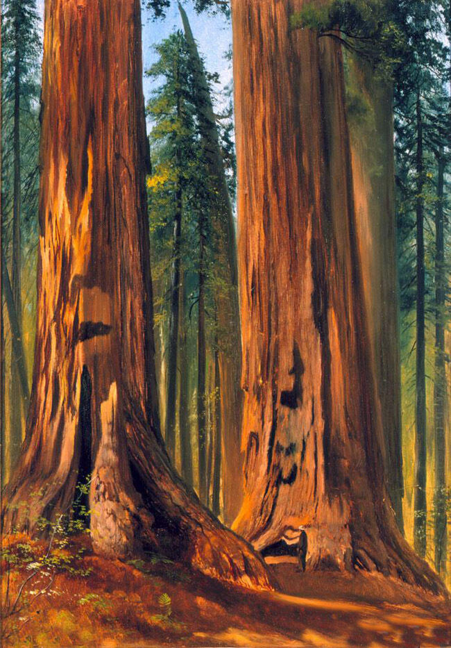 Stunning Oil painting Gilbert Munger - Redwoods (Giant ... Redwood Tree Painting