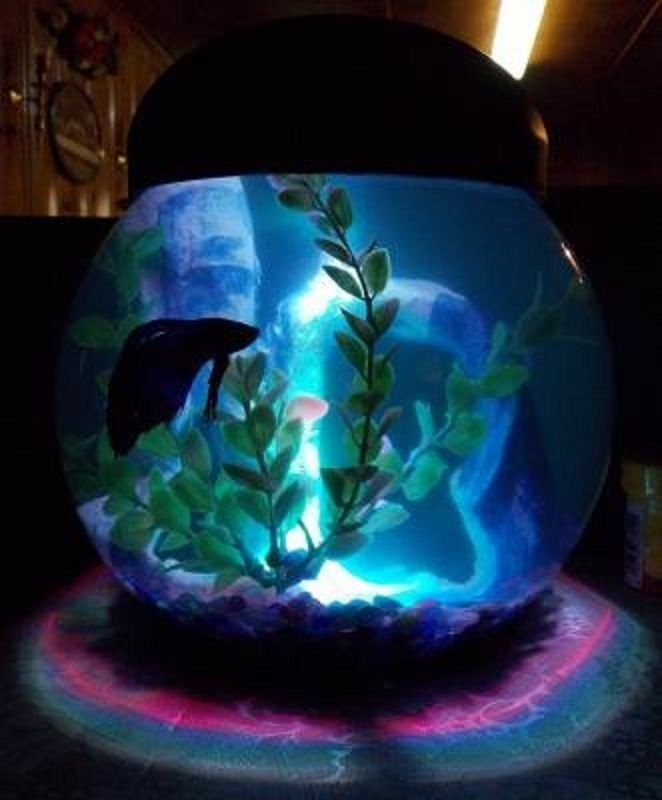 1 gallon betta aquarium fish tank fish bowl with led for Betta fish tank light