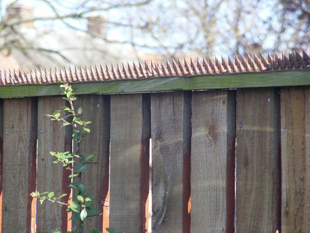 Fence Wall Spikes Brown Effective Against Humans Cats