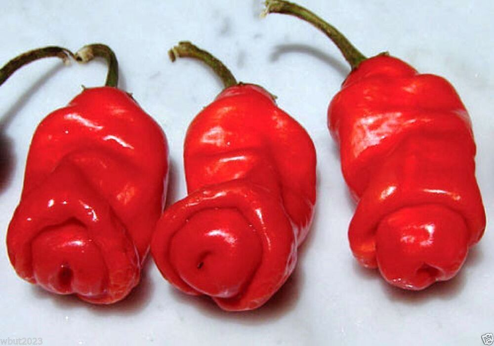 Penis Peppers 51