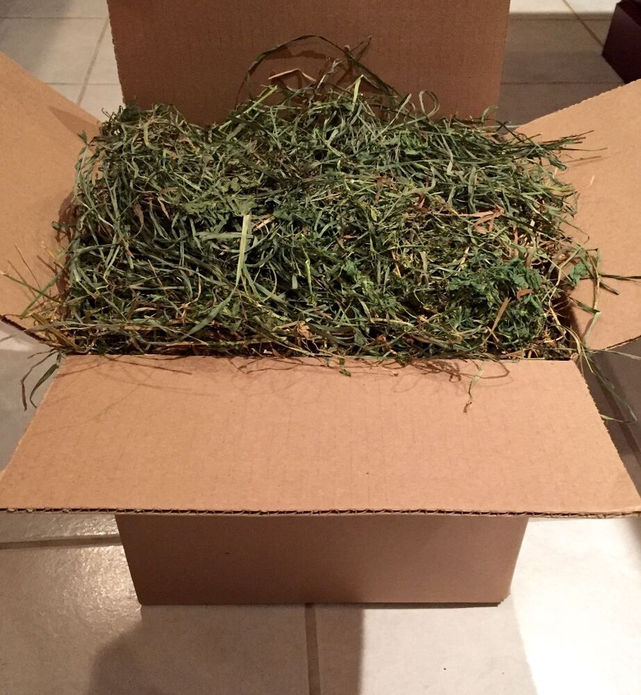 Alfalfa Orchardgrass H...