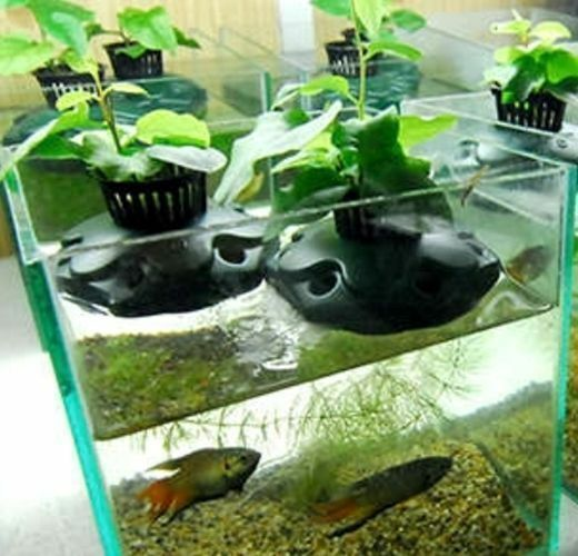 Aquaponics kit grow system plant planting hydroponics for Hydroponic fish tank
