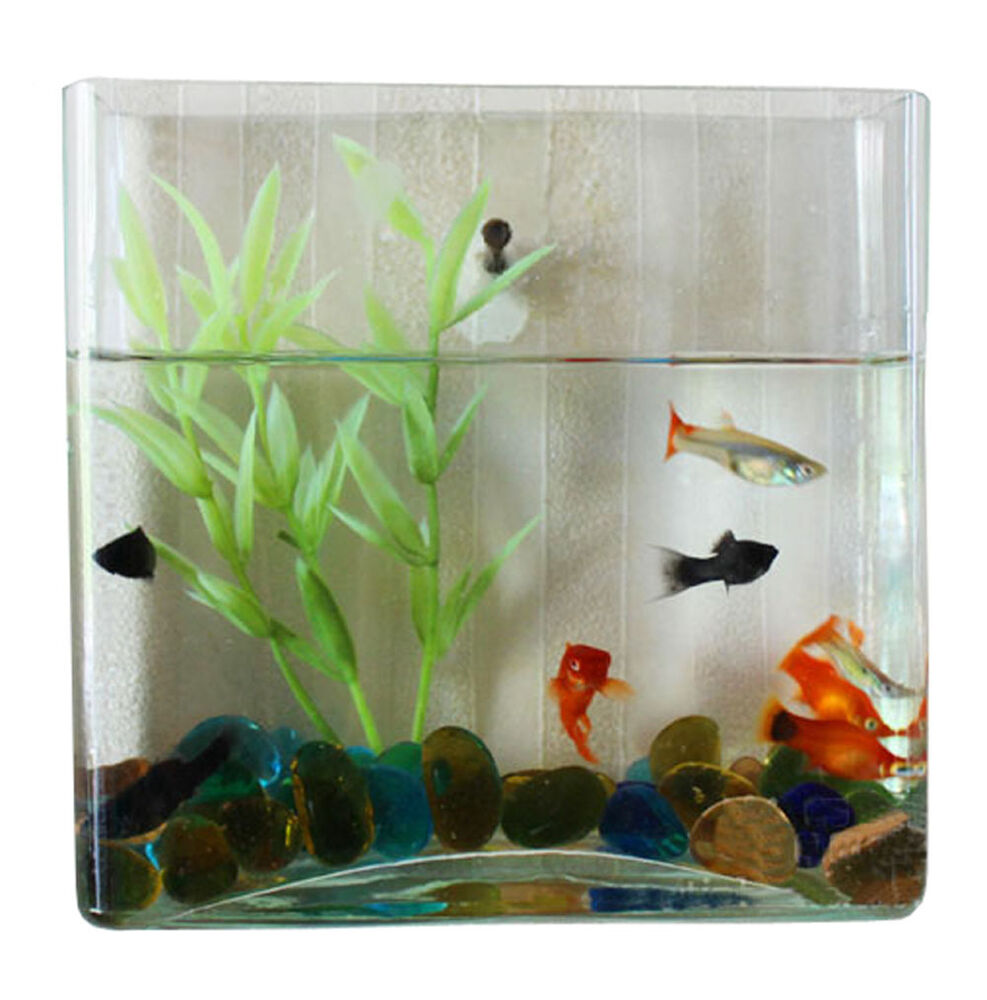 wall mount hanging betta fish bubble aquarium mini bowl tank square ebay. Black Bedroom Furniture Sets. Home Design Ideas