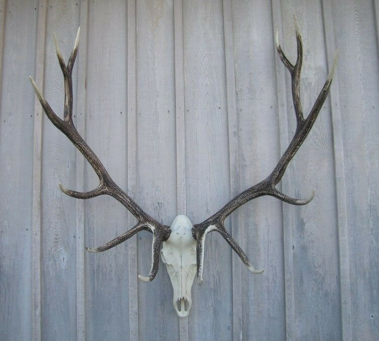 New 46 Quot North America Elk Antler Rack European Cast Mount