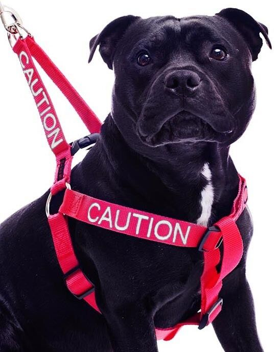 Color Coded Dog Harness Non Pull Caution Red Warning Super