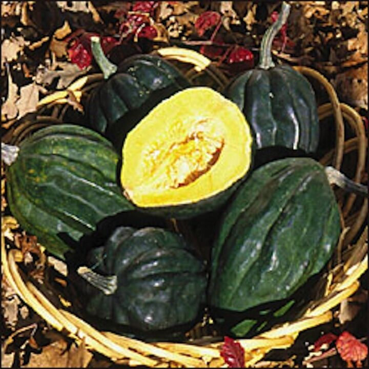 20 seeds table queen acorn squash new seed for 2017non gmo