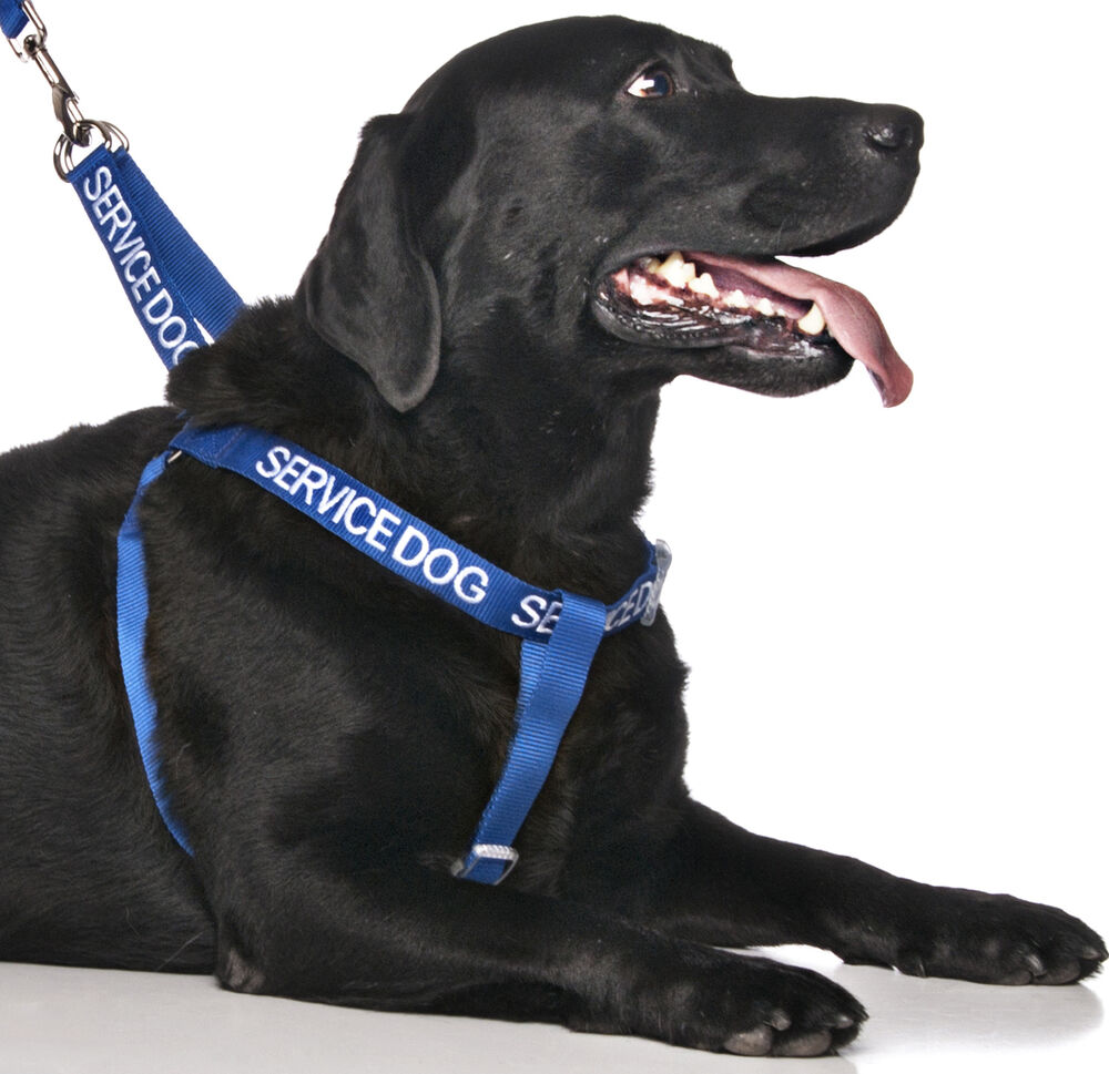 dog harness    dogs    pet strap    harness    non pull color coded blue service     dogs    pet strap    harness    non pull color coded blue service