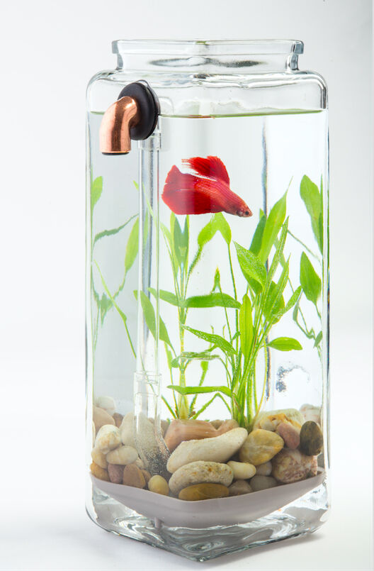Imperfect noclean aquariums self cleaning betta fish tank for Clean fish tank