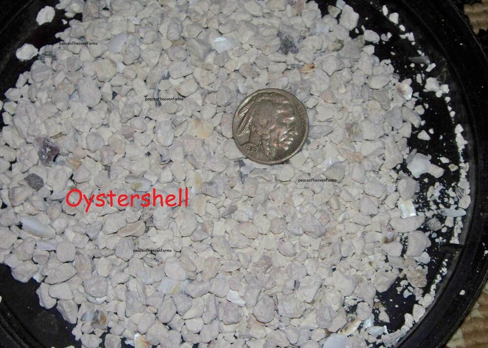 Oyster Shell For Soil Calcium Amendment And All Poultry