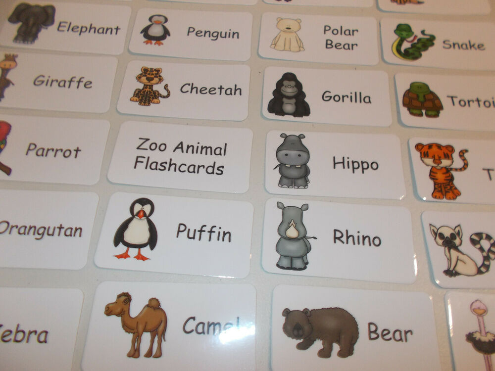 Zoo Animals Flash Cards. Preschool Picture And Word Flash