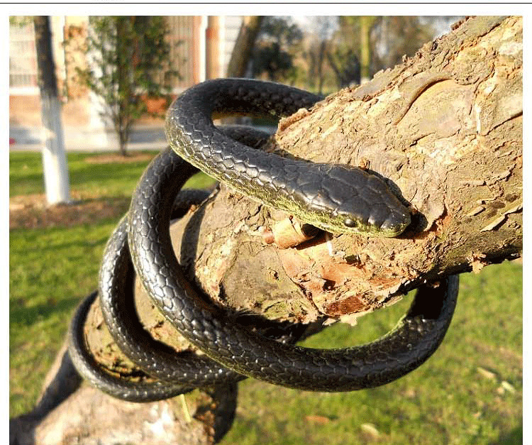 52 Quot Very Real Rubber Toy Fake Snake Safari Garden Prop