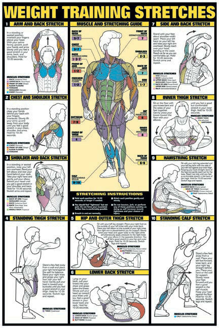 weight training stretches 24 u0026quot  x 36 u0026quot  paper poster