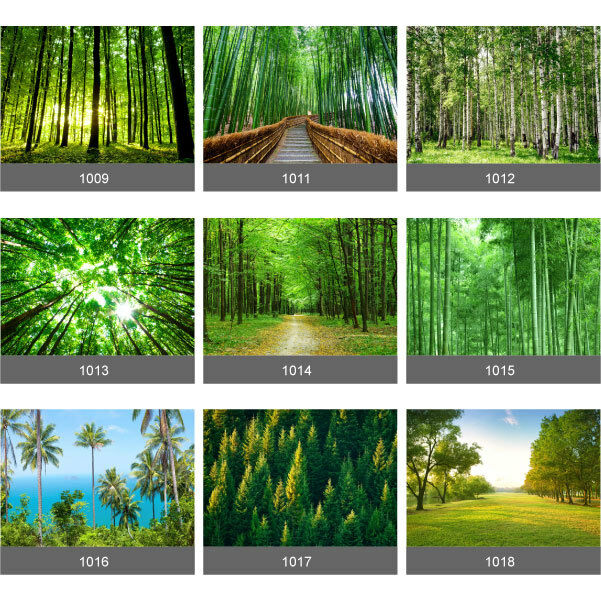 Forest trees wall mural photo wallpaper picture self for 1wall forest wallpaper mural
