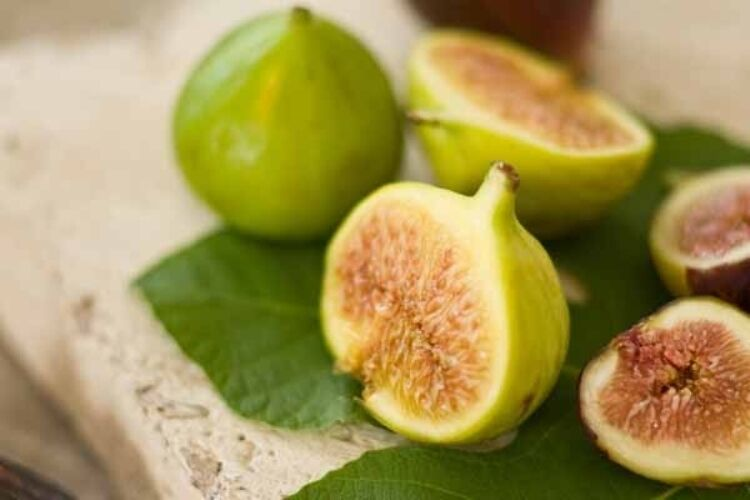 how to grow a fig tree from seed