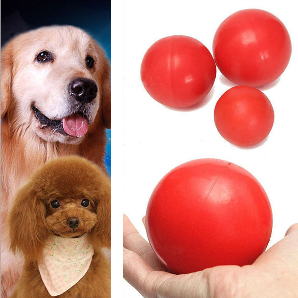 how to teach a dog to play with toys
