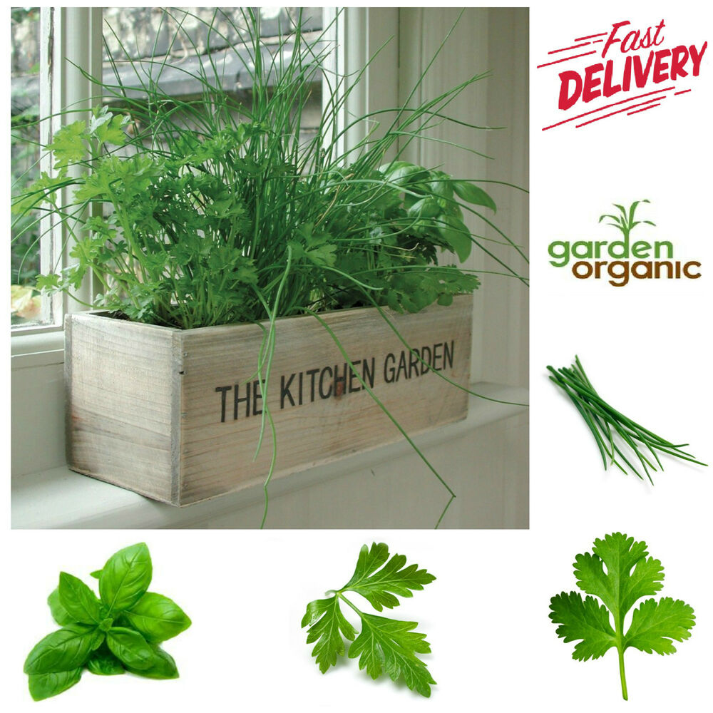 Kitchen Window Herb Planter: HERB GROWING KIT Kitchen Garden Grow Own Green Planter
