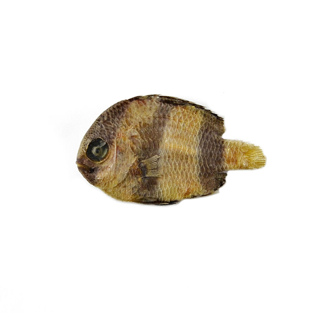 Fish Lapel Pin | eBay