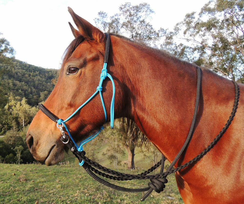 Bitless bridle/riding halter with plaited reins and ...