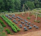 How to Make a Vegetable Garden Big Money in Small Plots