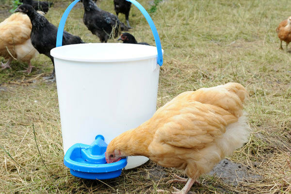 Maxi Cup Automatic Poultry Drinker Ebay