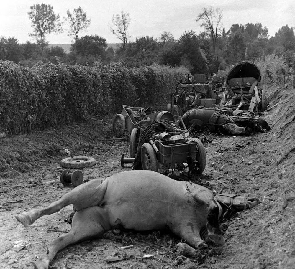 Ww2 Photo Wwii German Horses And Gear Falaise Pocket World