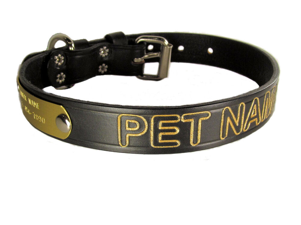 Dog Collar With Pet Name Number