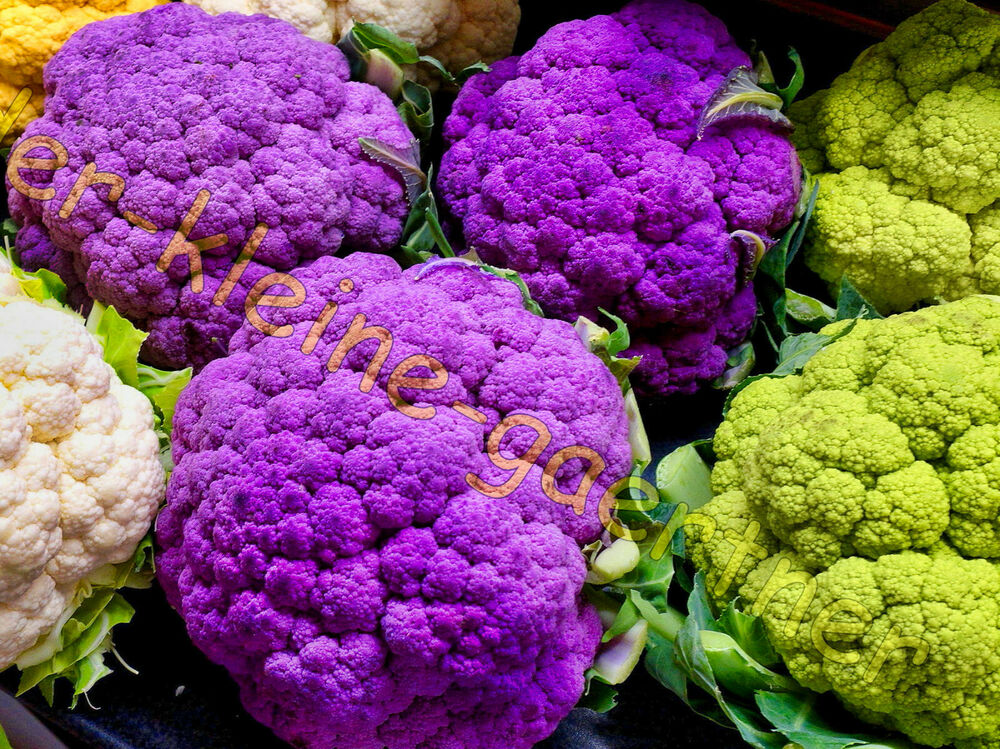 blumenkohl violett gro e lila k pfe fr hreif kohl brokkoli cauliflower 25 samen ebay. Black Bedroom Furniture Sets. Home Design Ideas
