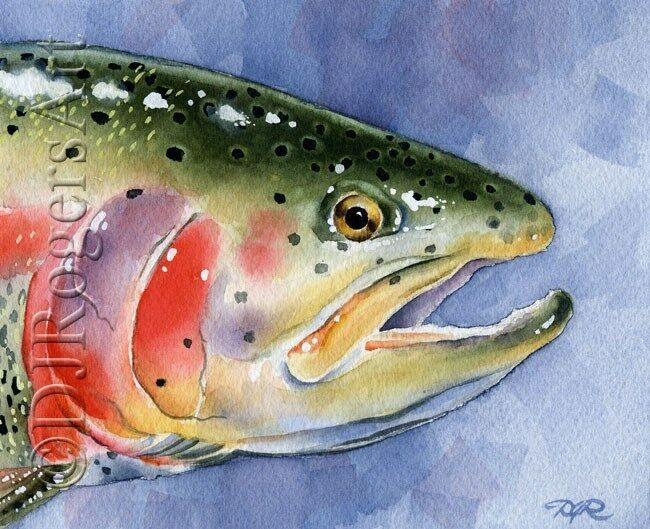 Fly fishing rainbow trout watercolor 8 x 10 art print for Fly fishing art