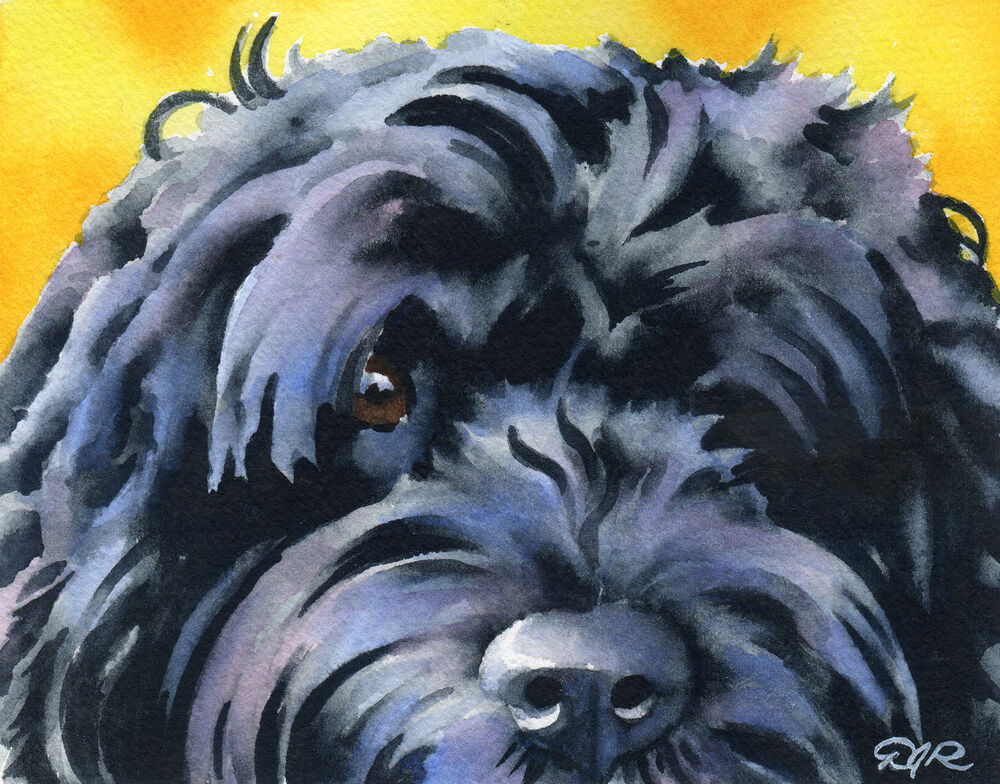 Portuguese Water Dog Watercolor 11 X 14 Art Print Signed