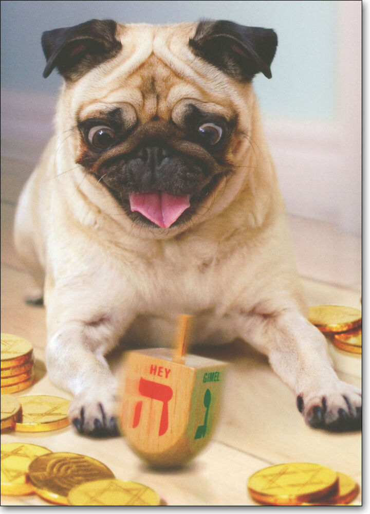Pug with Dreidel Dog Boxed Hanukkah Cards - 10 Greeting Cards by ...