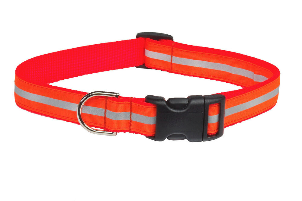 Size Of A Small To Medium Dog Collar