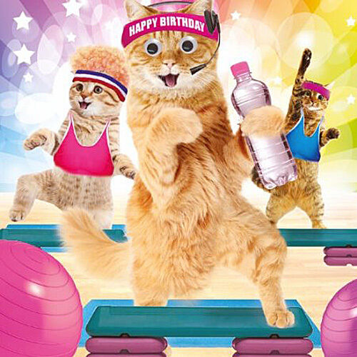 Funny Cats in Gym Keep Fit Birthday Card Work It Ladies 3D Goggly – Ladies Birthday Cards
